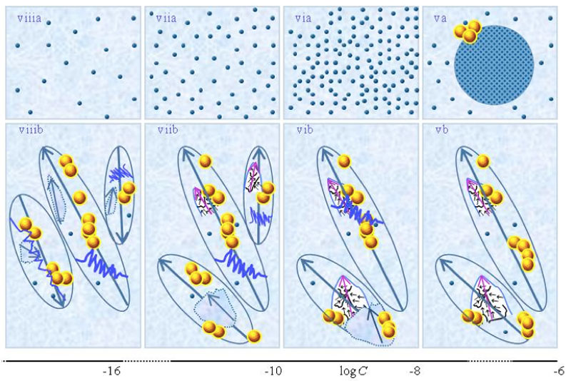 Figure 1: This figure presents a schematic picture of serial diluted strong electrolyte solutions. The series in Figures 1(a) and (b) pertain to solutions which, respectively, were not vigorously shaken and those which were vigorously shaken after each dilutions step. Tiny blue balls represent randomly moving ~10-9 m solvated ions. Yellow-brown balls and their agglomerates represent, respectively, ~10-7 m  and supra-. Figures ia and iia illustrate that on dilution the diameter of CDplasma (symbolized with purple-blue colored balls) increases and the fraction of randomly moving solvated solutes diminishes. Figures iia and iiia illustrate the transformation of CDplasma into IPDplasma at C=≈10-4 M. Note that the diameter of IPDplasma is that of CDplasma at C=. Figures iiia-va illustrate that on dilution the diameter of IPDplasma does not change, but the number of IPDplasma diminishes. Figures via-viiia illustrate that below a certain concentration there are insufficient solutes to form IPDplasma. The concentrations below which no IPDplasma form has yet not been theoretically derived. Figures via-viiia illustrate that whenever there are too few ions to form IPDplasma, the solution has the characteristics predicted by the customary models, i.e., all solvated electrolytes move randomly and their number diminishes on dilution. In the Figure 1b series, the blue zigzag curves symbolize shaken excites or cracks domains. Figures ib and iib illustrate that excitations or cracking does not significantly alter the internal structure of CDplasma, which just as in Figure 1a series are represented with purple-blue colored balls. Figures iib and iiib illustrate the transition from CDplasma to IPDplasma, with the latter pictured as blue-crystalline balls just as in the (a) series. Figures iiib and ivb illustrate that shaking excites or breaks up IPDplasma. The excited or broken IPDplasma pieces, which in the text we denoted electric dipole aggregate (EDAIPDplasma), are pictured as irregular shaped aggregates in (ivb). The aligned black arrows orderings in EDAIPDplasma symbolize these domains' distorted ferroelectric H2O orderings.  The purple arrows in the EDAIPDplasma symbolizes these domains' dipole moments. Figures ivb and vb illustrate that on diluting below a critical concentration CDrot get stabilized by EDAIPDplasma, i.e., the irregular shaped EDAIPDplasma are located  within the elongated ovals representing CDrot. The mechanism underlying stabilization of CDrot by EDAIPDplasma is explained in the text. The dark blue arrows symbolize the dipole moment of CDrot. Figure vib shows that vigorous shaking excites or breaks up CDrot. The excited or broken CDrot pieces, which in the text we denoted electric dipole aggregate (EDACDrot), are outlined with an irregular shaped broken line, e.g., the chunk located at the bottom of the CDrot to the left in Figure vib. Figures vib-viib show that at certain concentrations both EDAIPDplasma and EDACDrot are present within CDrot, though the sizes of EDAIPDplasma  diminish with concentration. Figures viiib shows that on diluting further, no EDAIPDplasma persist, i.e., there are too few solute particles to sustain EDAIPDplasma. At these concentrations, vigorous shaking just breaks up CDrot and creates new EDACDrot. These in turn stabilize new CDrot, as pictured in Figure viiib. Figures vb-viib illustrate that CDrot may align with their dipole moments parallel. Figure viiib illustrates that at certain concentrations their dipoles may be aligned anti-parallel. Note that the sizes of the various domains, their broken pieces and the sizes of the solvated solutes with their hydration shells are not presented according to their realistic scale ratios.