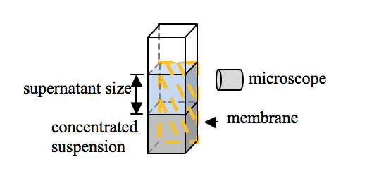 Figure 1: Schematic diagram of the microscope observation setup.