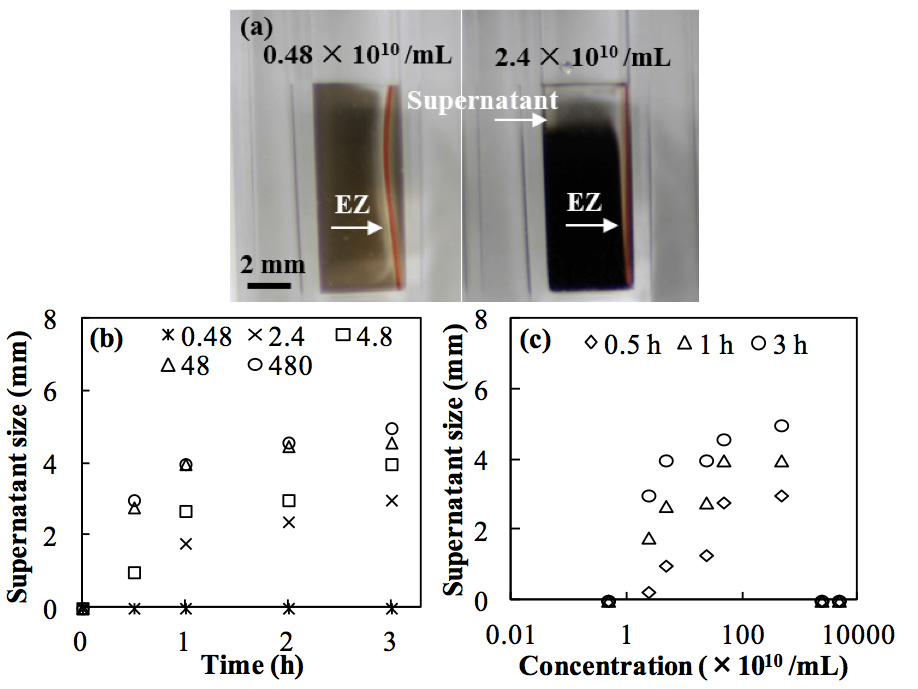Figure 4: Effect of carbon black concentrations on the development of phase separation (measured as supernatant size) caused by Nafion. (a) Supernatant sizes at low (left) and high (right) concentrations at 1 h. (b) Growth of supernatant size at various concentrations (×1010 /mL) up to 3 h. (c) Supernatant sizes at various times at concentrations of 4.8 × 109 to 4.8 × 1013 /mL.