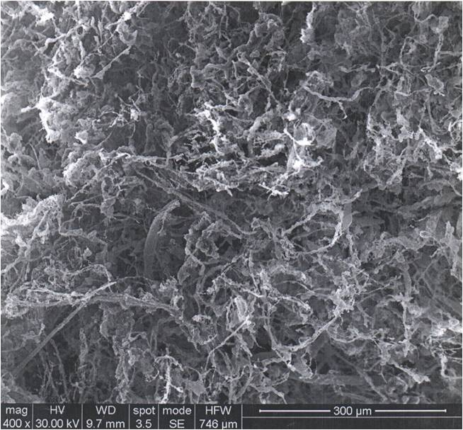 Figure 3. SEM image of R<sub>INW</sub>. This figure shows the solid material left over after lyophilization of INW.